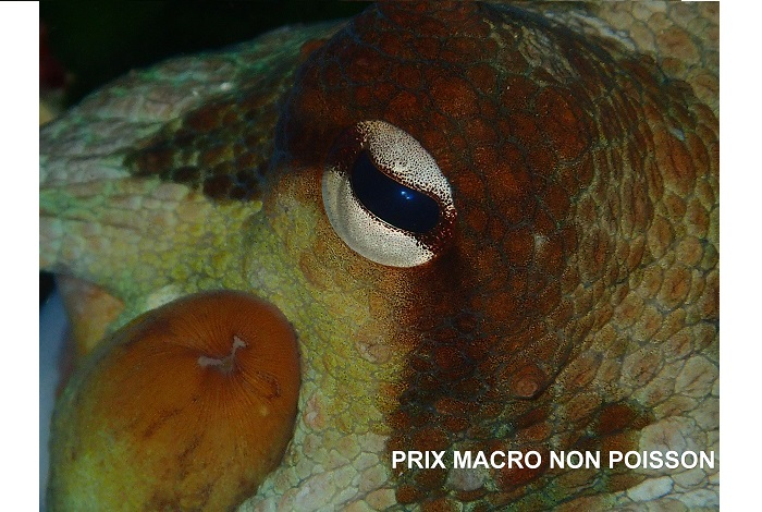 3ème - Didier Marcellesi - Prix macro non poisson