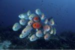 Mayotte : palmarès du festival de la mer et de l'image sous-marine 2018