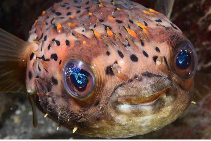 1er - prix poisson © Julien Carpels