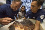 Rana, une jeune tortue soignée à Monaco, retrouve la mer