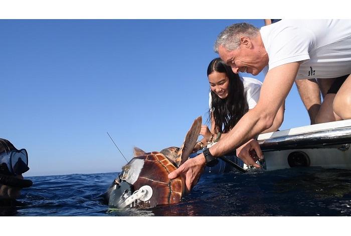 Olivier Calcagno, directeur général du musée océanographique et Rana, sa marraine, remettent la tortue à l'eau. ©F.Pacorel