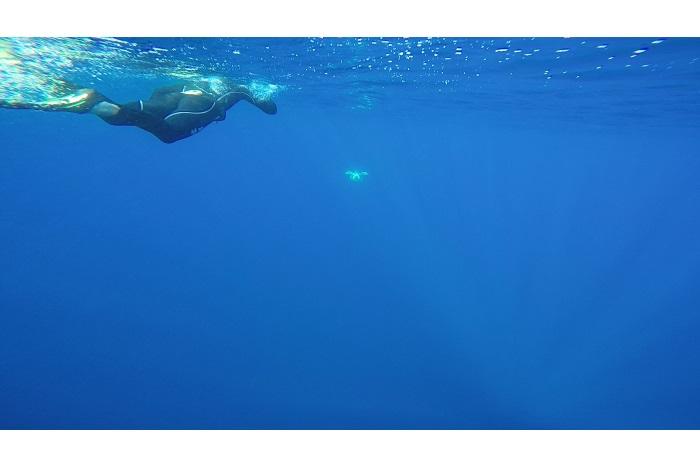 Rana a finalement retrouvé le grand large. © F.Pacorel - Musée océanographique