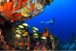 Championnats de France de photo sous-marine en Martinique : le palmarès
