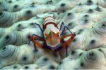 Nouvelle-Calédonie : palmarès du festival international de l'image sous-marine