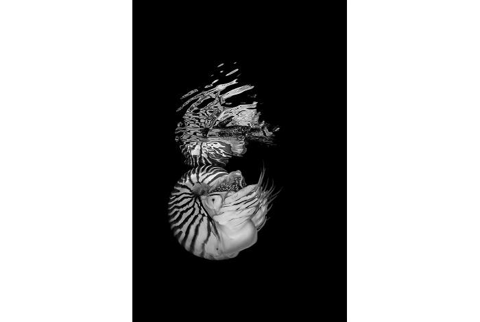 """Bronze, noir et blanc, """"Nautile sous la surface"""" © Jack Berthomier"""