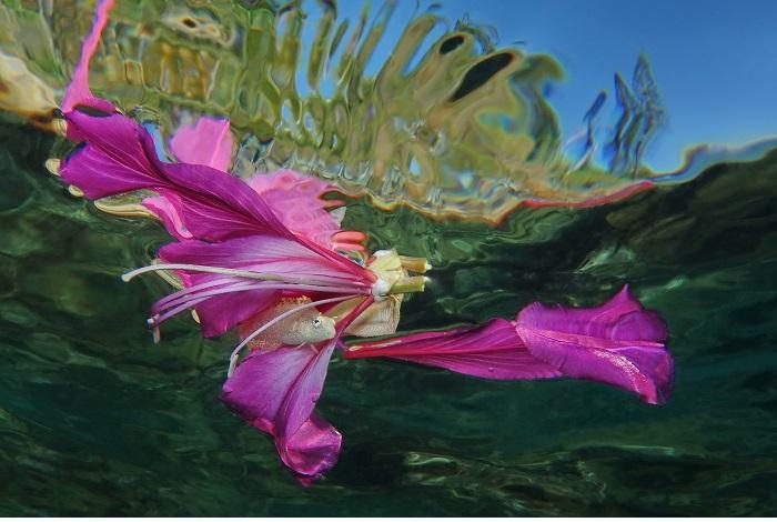 """Or, Série thématique, """"Dites-le avec des fleurs"""" © Jack Berthomier"""