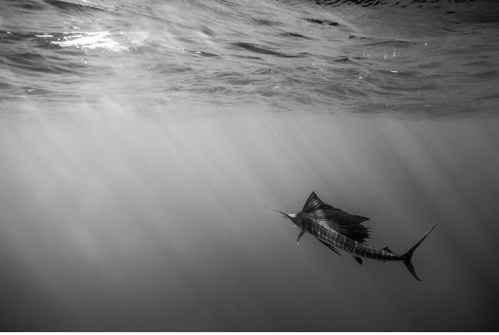 """Or, noir et blanc, """"Toutes voiles dehors"""" © Cécile Barats"""