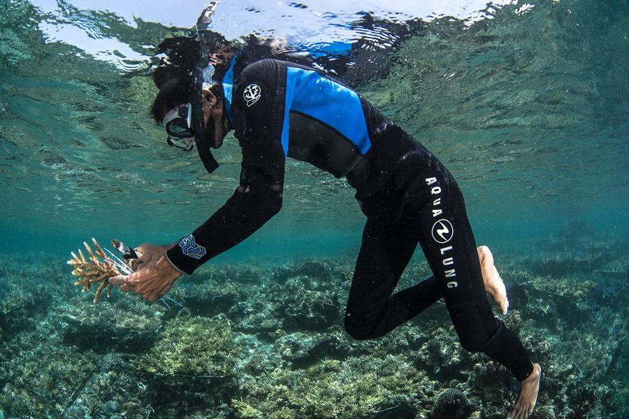 Parmi les sciences participatives, la restauration des récifs coralliens tient une place importante. © Martin Colognoli