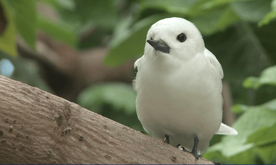 L'île-aux-Cocos est un véritable sanctuaire pour de nombreuses espèces d'oiseaux. ©René Heuzey