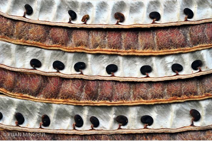 """Catégorie graphisme, forme et matière de la nature """"Woods in a Pod"""". © Yuan Minghui."""