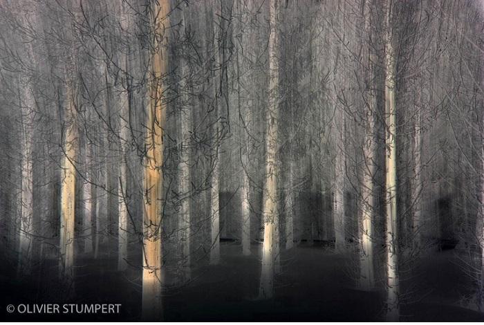 """Catégorie images fixes de nature revisitées """"Les épicéas"""". © Olivier Stumpert."""