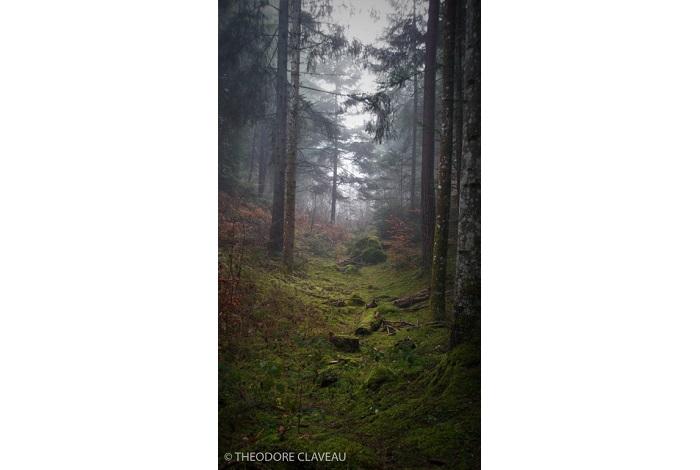 """Catégorie paysages naturels du monde """"Le chemin"""". © Théodore Claveau."""