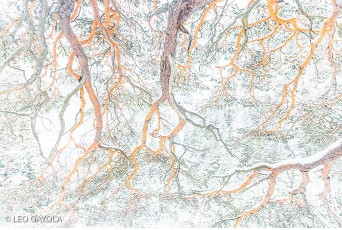 """Catégorie plantes sauvages de pleine nature """"Les branches et la neige"""". © Leo Gayola."""