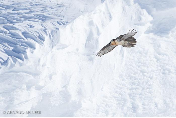 """Catégorie oiseaux sauvages de pleine nature """"L'envol du roi"""". © Arnaud Spinedi."""