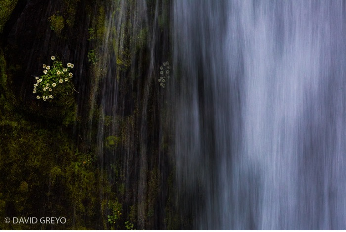 """Catégorie plantes sauvages de pleine nature """"Arrosage automatique"""". © David Greyo."""