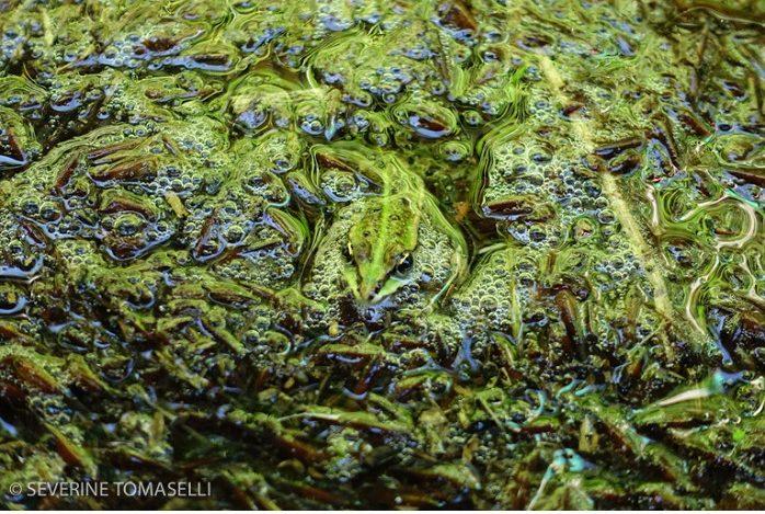 """Catégorie autres animaux sauvages de pleine nature """"Osmose"""". © Séverine Tomaselli."""