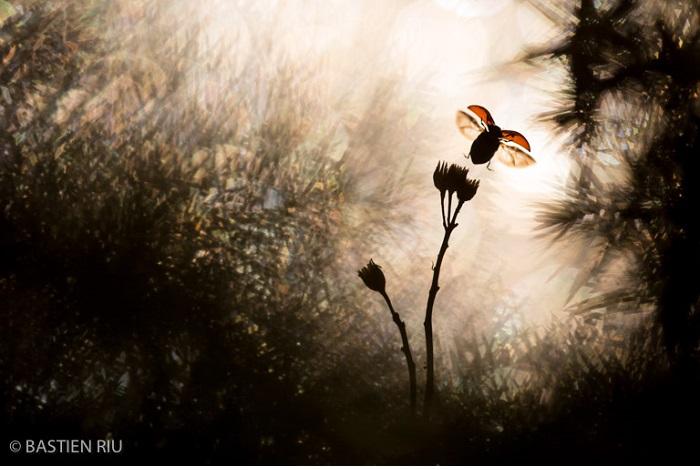 """Catégorie autres animaux sauvages de pleine nature """"Envol"""". © Bastien Riu."""