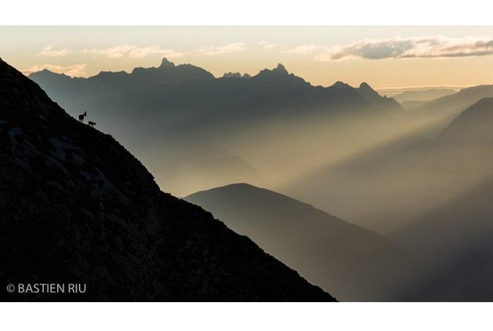 """Catégorie mammifères sauvages de pleine nature """"Rencontre d'altitude"""". © Bastien Riu."""