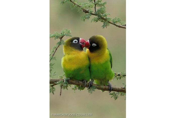 """Catégorie oiseaux sauvages de pleine nature """" Duo coloré"""". © Margaux Joos-Couaillier."""