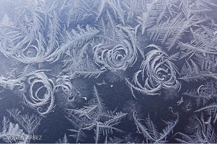 """Catégorie graphisme, forme et matière de la nature """"Fleurs de givre"""". © Julien Arbez"""