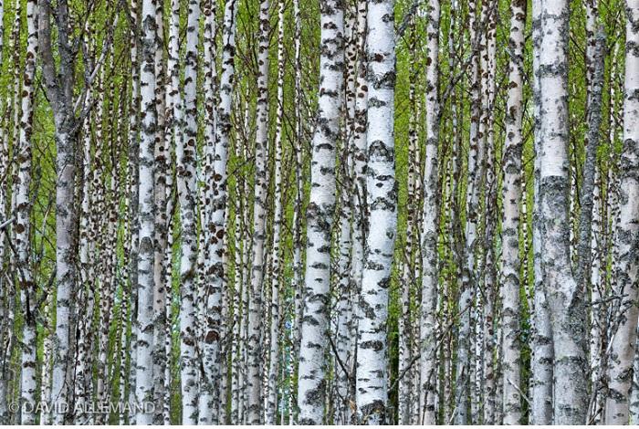 """Catégorie plantes sauvages de pleine nature """"Printemps"""". © David Allemand."""