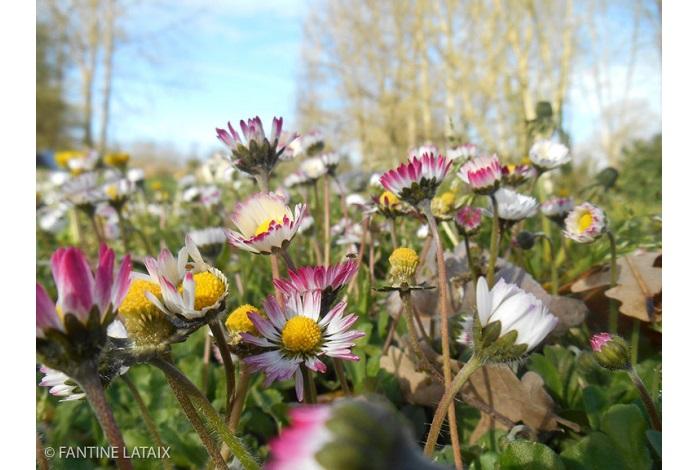 """Catégorie plantes sauvages de pleine nature """"Elles m'aiment : un peu, beaucoup..."""". © Fantine Lataix."""