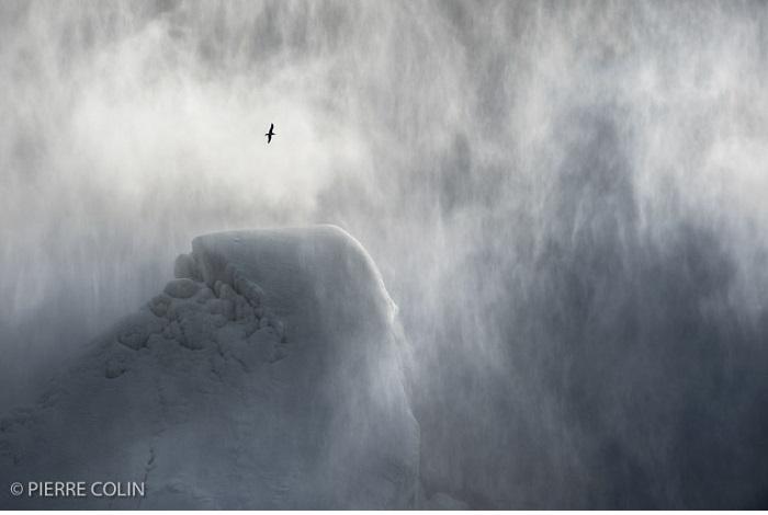 """Catégorie oiseaux sauvages de pleine nature """" Vol Féérique"""". © Pierre Colin."""