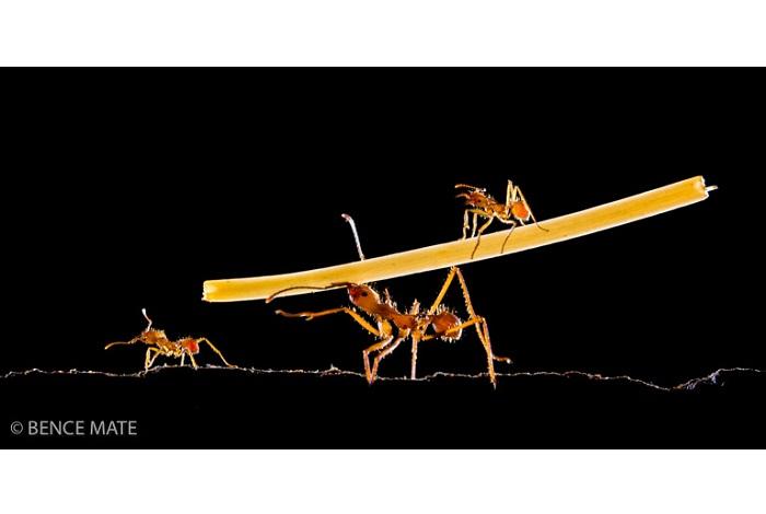 """Catégorie autres animaux sauvages de pleine nature """"Apprentices"""". © Bence Mate."""