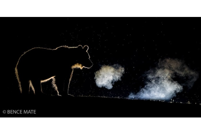 "Catégorie mammifères sauvages de pleine nature ""Breathing"". © Bence Mate."
