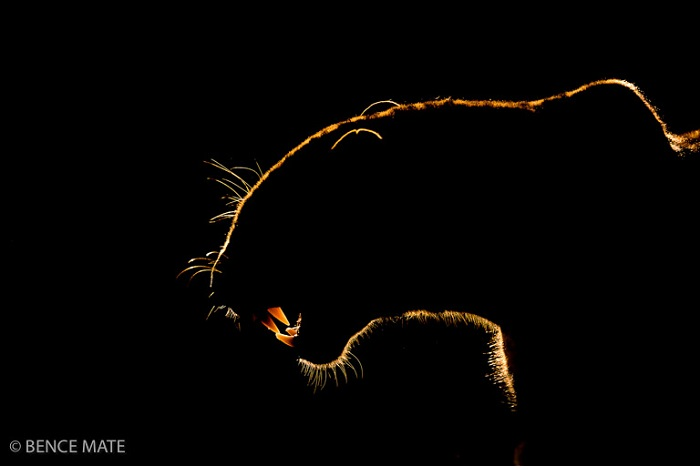 """Catégorie séquences images fixes """"Lights and shades"""". © Bence Mate."""