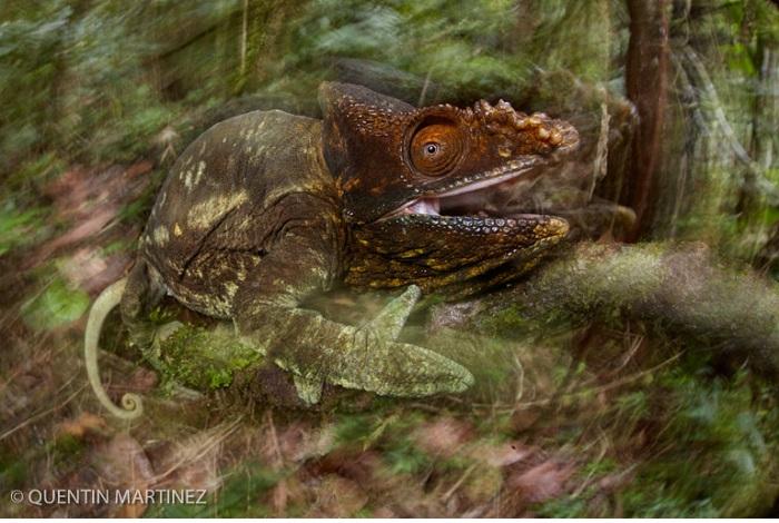 """Catégorie autres animaux sauvages de pleine nature """"The displeased guardian"""". © Quentin Martinez."""