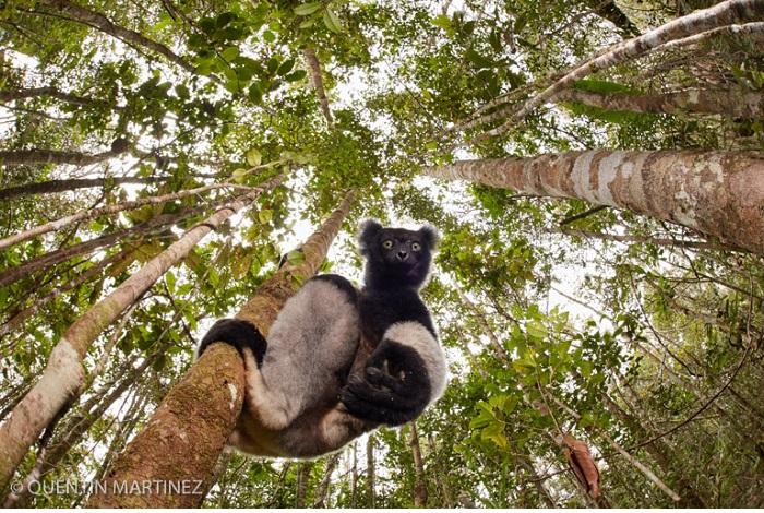 "Catégorie mammifères sauvages de pleine nature ""The intrigued"". © Quentin Martinez."
