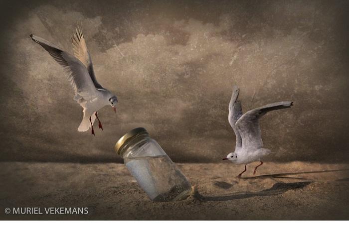 """Catégorie images fixes de nature revisitées """"Où est l'eau ?"""". © Muriel Vekemans."""