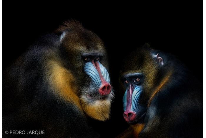 """Catégorie images fixes de nature revisitées """"conspiration"""". © Pedro Jarque."""