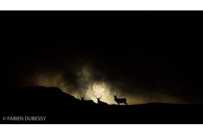 """Catégorie mammifères sauvages de pleine nature """"Full sun"""". © Fabien Dubessy."""