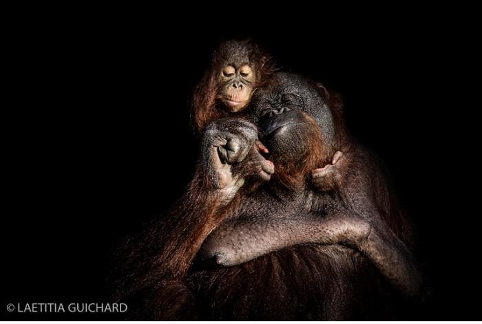 """Catégorie images fixes de nature revisitées """"Love (zoo)"""". © Laeticia Guichard."""