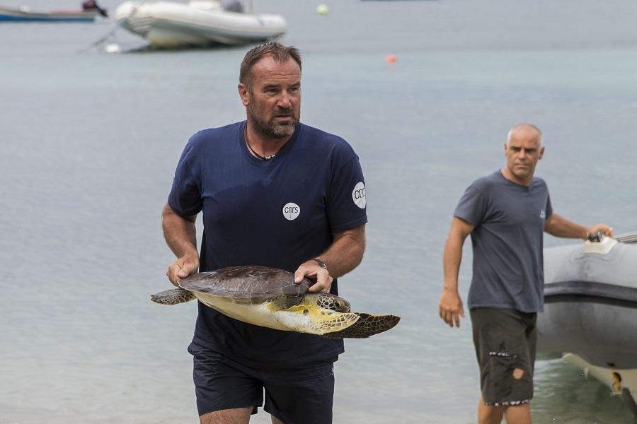 Damien Chevallier, chercheur au CNRS s'apprête à équiper une tortue verte d'une balise. © Olivier Borde - Exploration de Monaco.