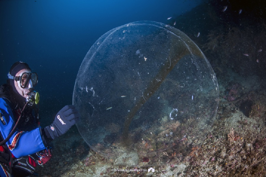 Cette sphère a été observée en Italie en 2011, à 50 mètres de profondeur. Elle ressemble à celles observées en Norvège. © Edoardo Ruspantini