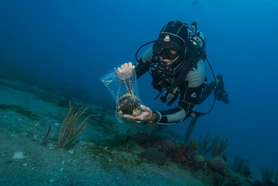 Des objets comme cette bouteille de vin sont souvent rapidement pillés par les chasseurs de trésors, raison pour laquelle ils doivent être récupérés le plus rapidement possible. © Mike Harterink