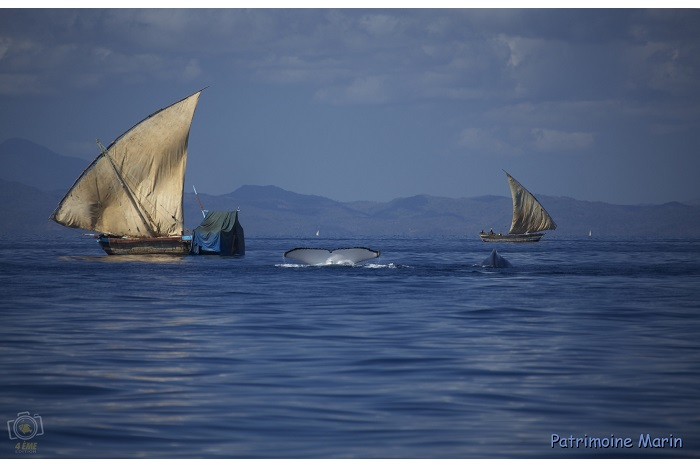 2ème - catégorie patrimoine marin - © James Caratini