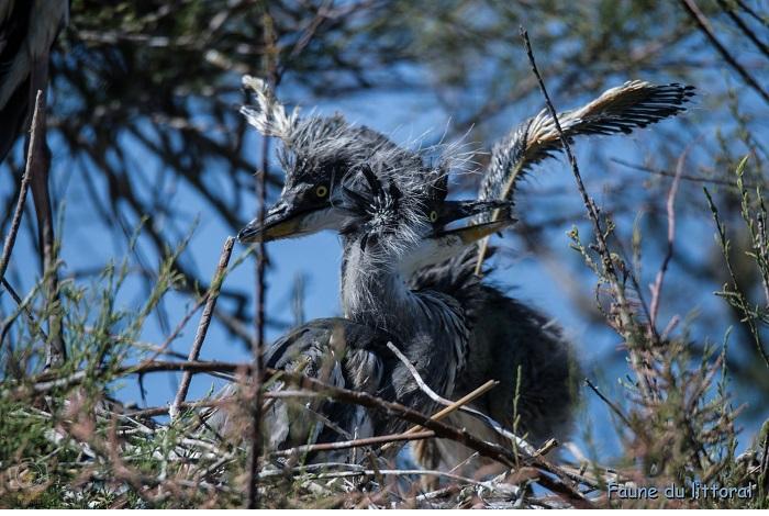 2ème - catégorie faune littoral, oiseaux- © Théo Maynier