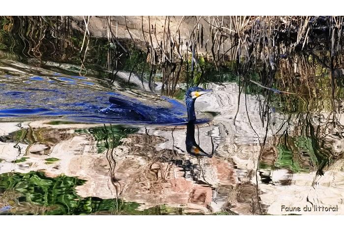 3ème - catégorie faune littoral, oiseaux- © Pierre Rémy