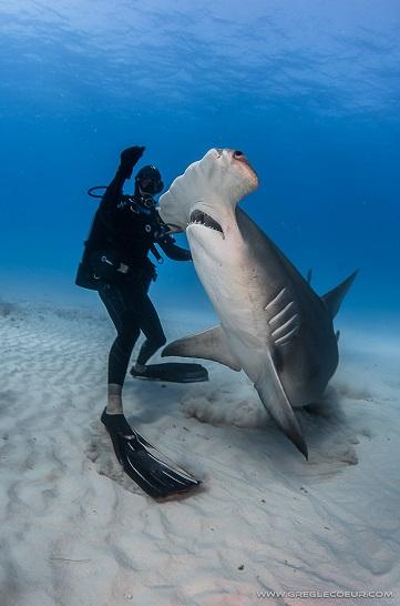 Connaître et comprendre les requins sont les clés pouvoir interagir avec eux en toute sécurité. © Greg Lecoeur