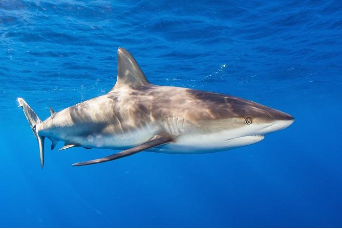 3ème prix requins © Alejandro Topete
