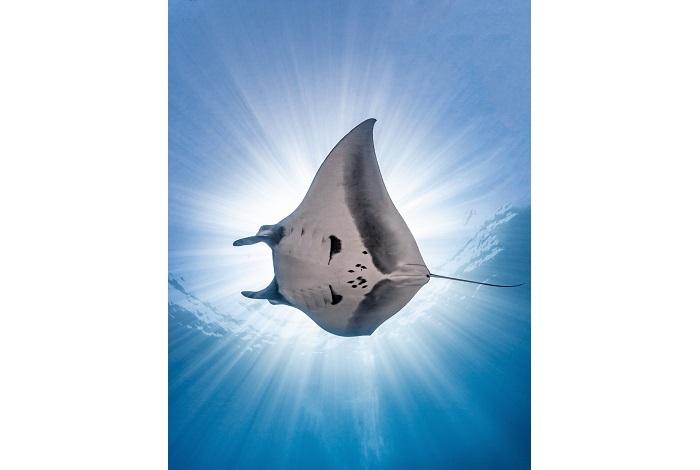 2ème prix vie marine © Nick Polanszky