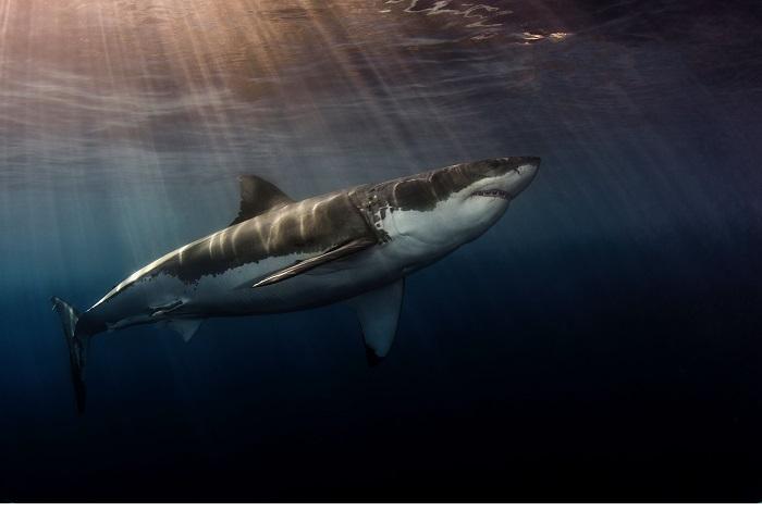 1er prix requins © Steven Anderson