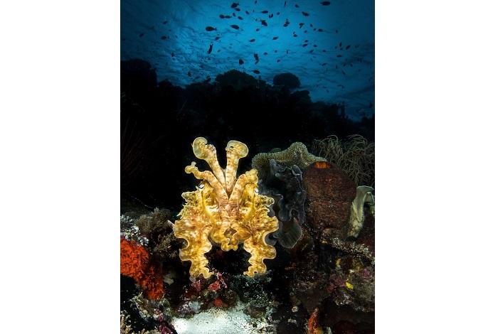 3ème prix vie marine © Steven Miller