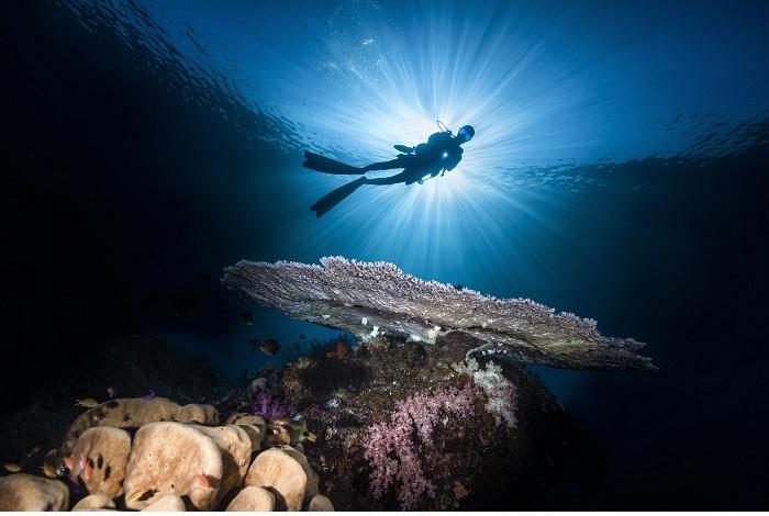 2ème prix plongeur© Wayne Jones