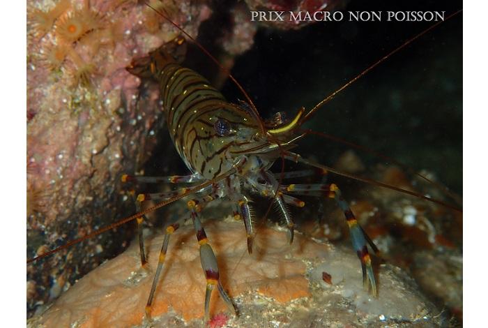1er et pric macro non poisson © Olivier Messin
