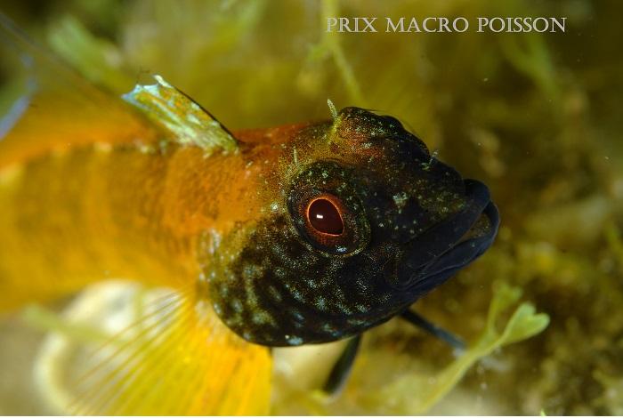2ème et prix macro poisson © Guy Milano.